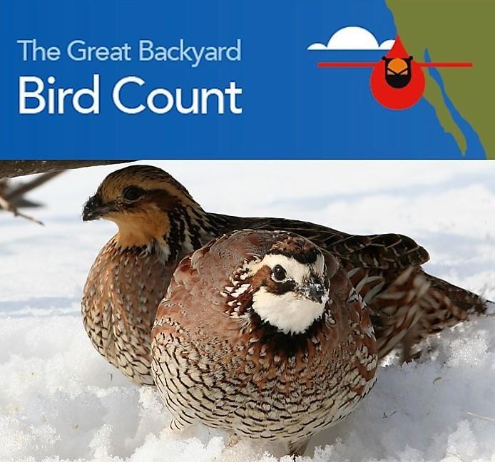 2019 Great Backyard Bird Count   FCAS