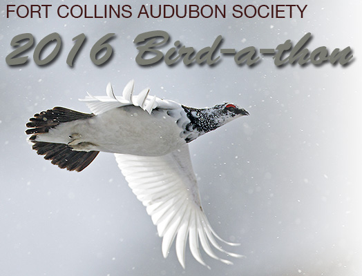 Fort Collins Audubon Society 2016 Bird-a-thon